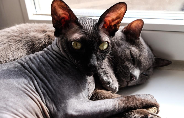 светилась лысые коты картинки сезонный овощ, который