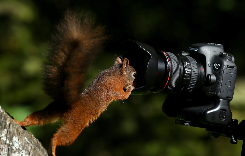 Картинки, фотоаппарат картинки прикольные