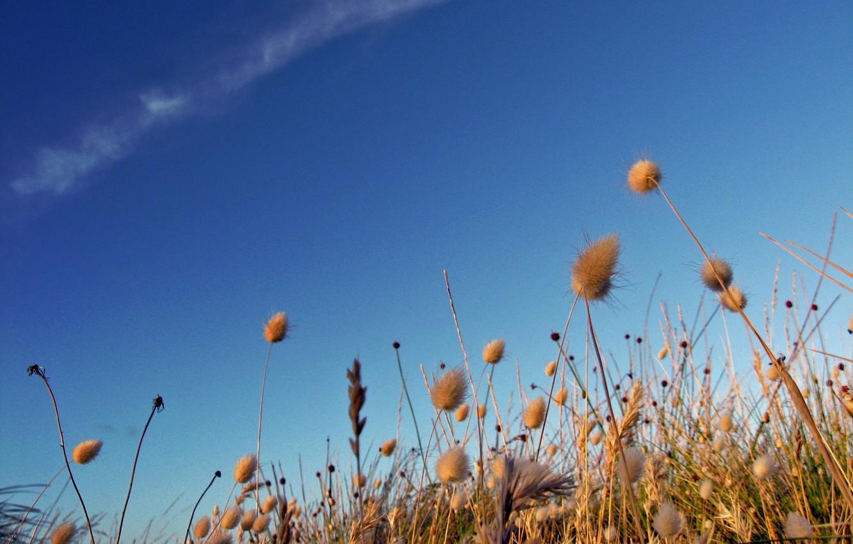Фото обои поле, небо, жизнь