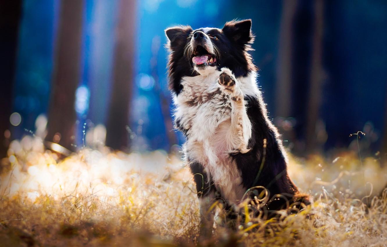 Фото обои взгляд, друг, верность, собака
