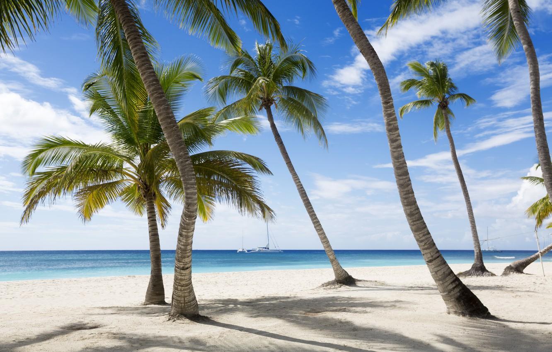 Фото обои песок, море, пляж, берег, summer, beach, sea, sand, shore, paradise, palms, tropical