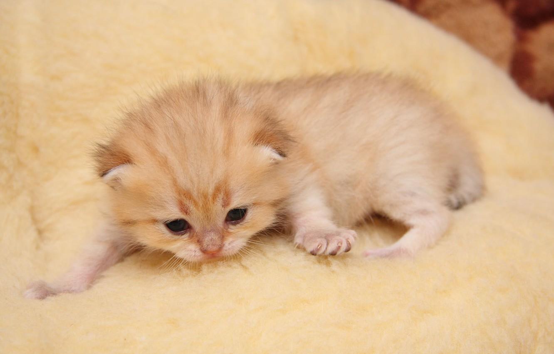 Дарья герасимова, открытки котята маленькие
