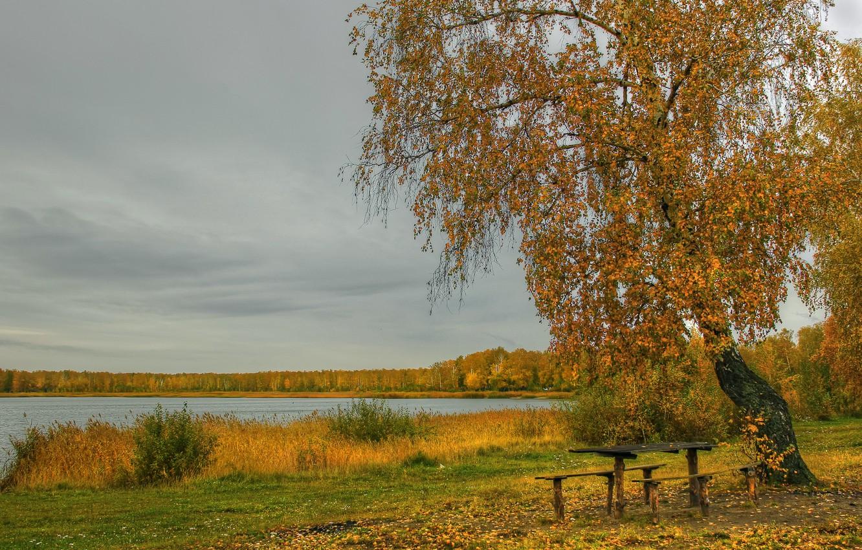 Фото обои осень, трава, листья, река, берег, береза, столик, лавочки