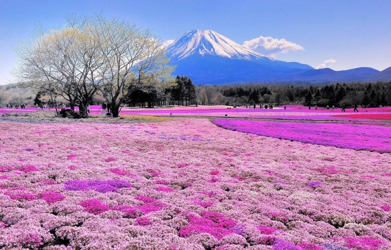 Фото обои поле, цветы, дерево, гора, Япония, Фудзияма