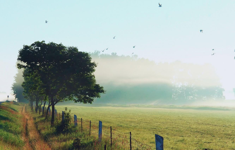 Фото обои небо, трава, птицы, природа, туман, роса, забор, утро, обочина
