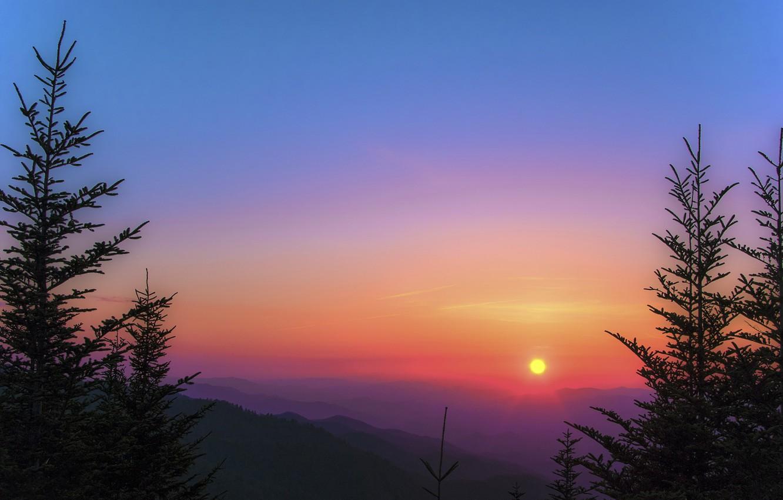 Обои восход, ёлки, утро. Природа foto 6