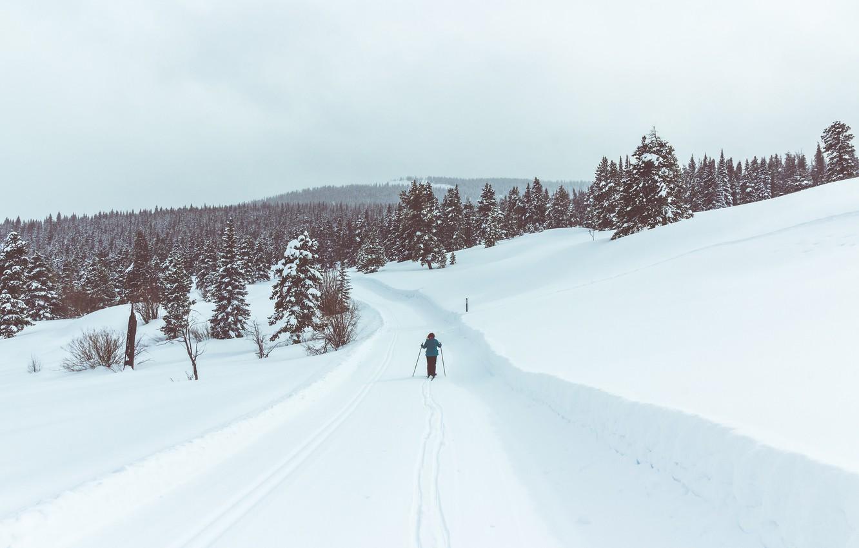 Фото обои road, winter, person, ski, pine, skiing, snowing