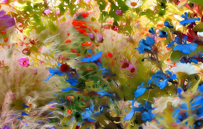 Обои луг, цветы. Абстракции foto 7