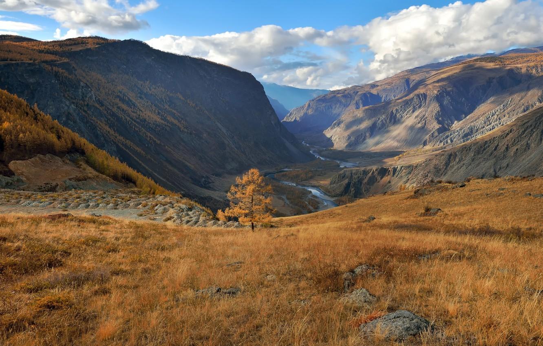 Фото обои осень, Алтай, лиственница