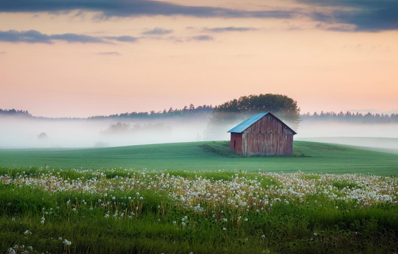 Фото обои поле, туман, дом, одуванчики