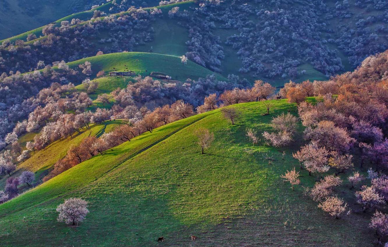 Фото обои деревья, горы, холмы, весна, Китай, цветение