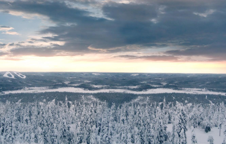 Фото обои зима, лес, облака, снег, Деревья
