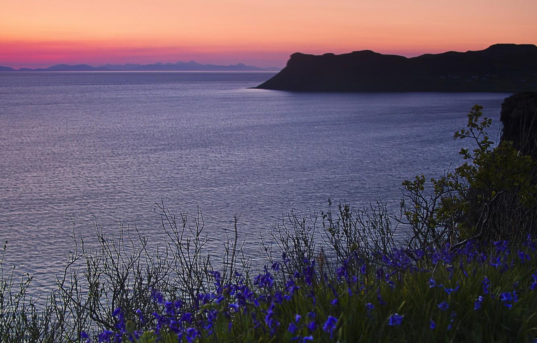тачки, море фиолетовых цветов картинки студия должна держать