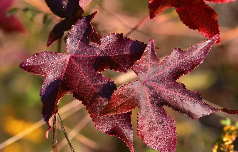 Фото обои осень, листья, вода, капли, макро, природа