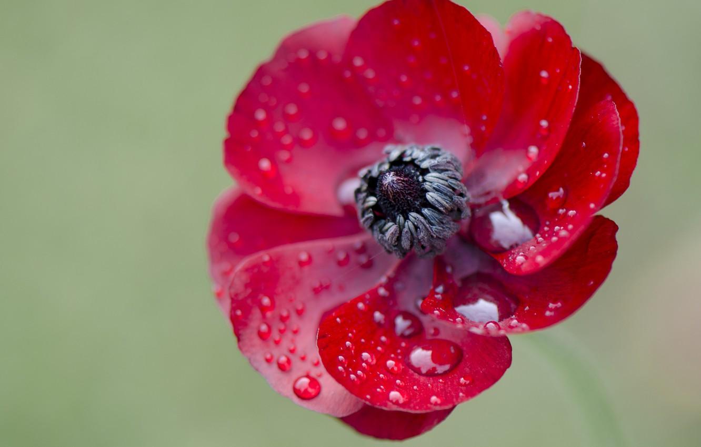талине девочка макро картинки с цветами желаем долгих