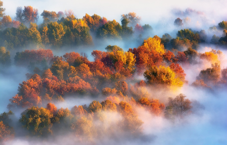Осенним густым туманом картинки