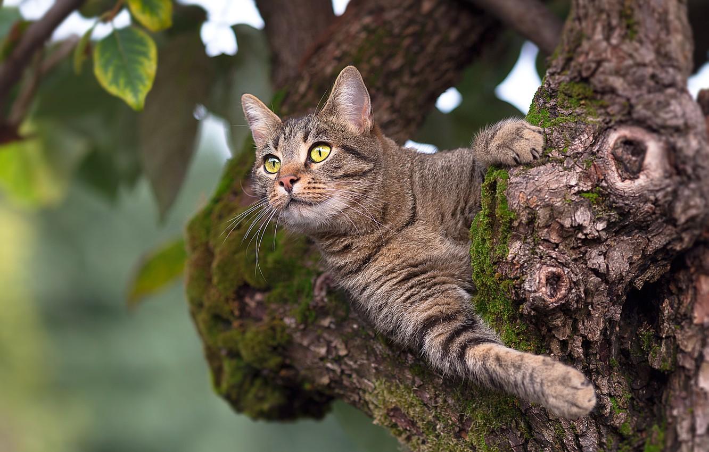 фото кошек на дереве другой стороны есть