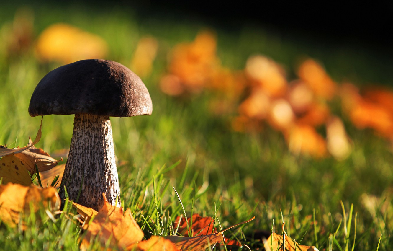Картинки лес грибы осень сентябрь