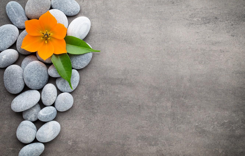 Фото обои цветы, камни, flower, orchid, stones, spa, zen