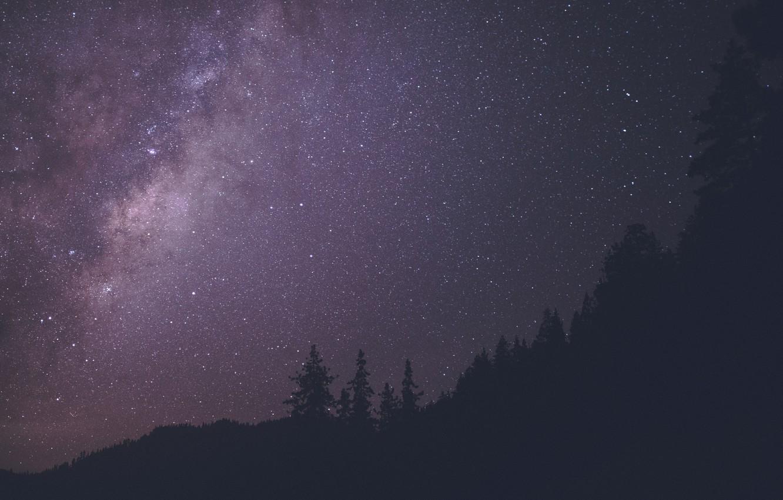 Фото обои лес, ночь, путь, млечный, небо.звезды