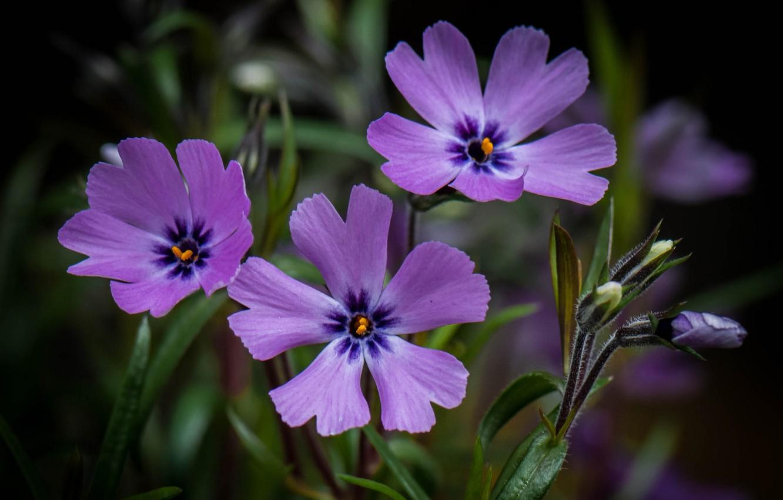 Фото обои поле, природа, растение, лепестки, луг