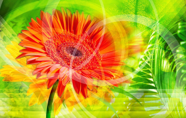 Фото обои цветок, оранжевый, обои, листок, стебель