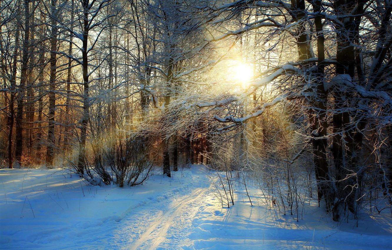 Фото обои зима, дорога, лес, небо, снег, деревья, пейзаж, природа, white, forest, road, sky, trees, nature, sunset, …