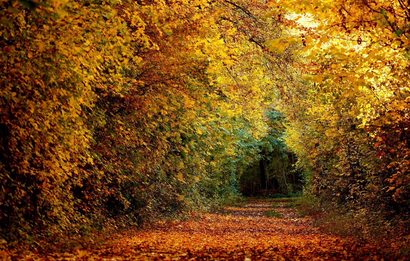 Фото обои forest, nature, autumn, leaves, path
