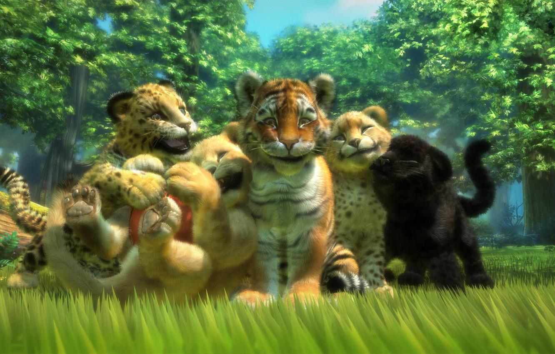 Картинки львов тигров леопардов