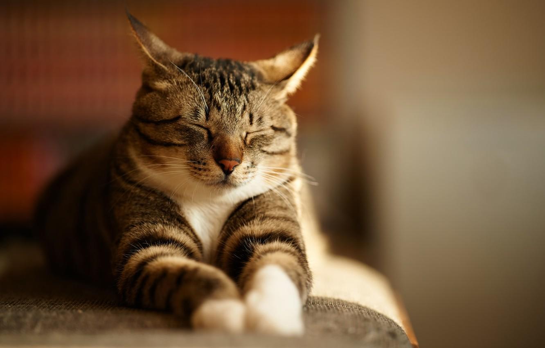Фото обои серый, Кот, спит, полосатый