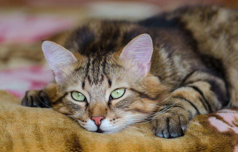стеллажи валяющиеся коты картинки фото все цивильно