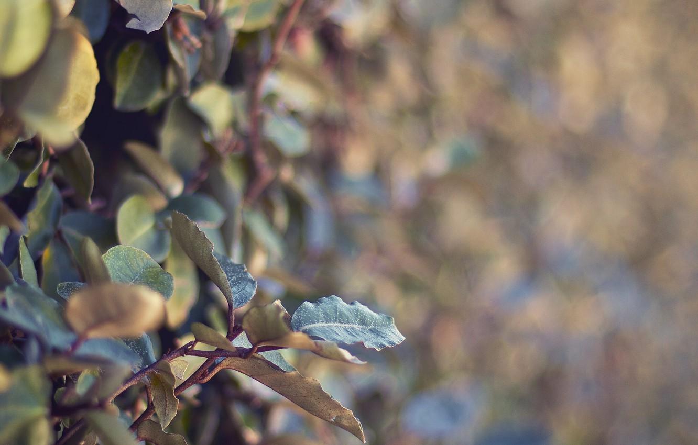 Фото обои листья, макро, ветки, природа