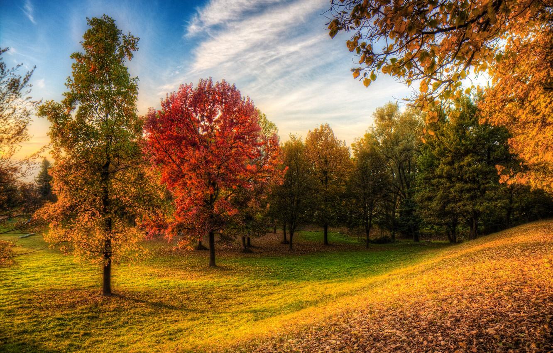 картинка осенней полянки леса свою