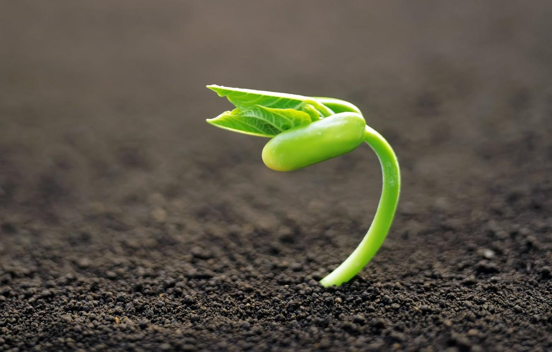 Фото обои макро, фон, земля, растение, росток, фокус, зелёный