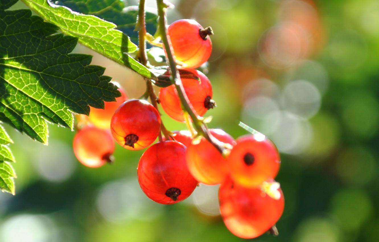 Фото обои лето, природа, ягоды, смородина