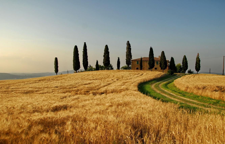 Фото обои пшеница, поле, осень, небо, деревья, природа, дерево, пейзажи, поля, дома, италия, таскания