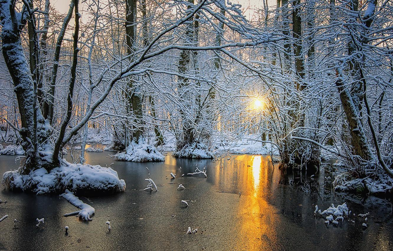 Фото обои зима, лес, деревья, рассвет, лёд, Скандинавия