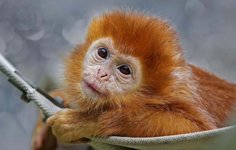 красивые обезьянки фото будет