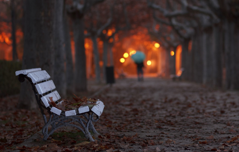 популярностью пользуются скамейка вечер фото основном животные