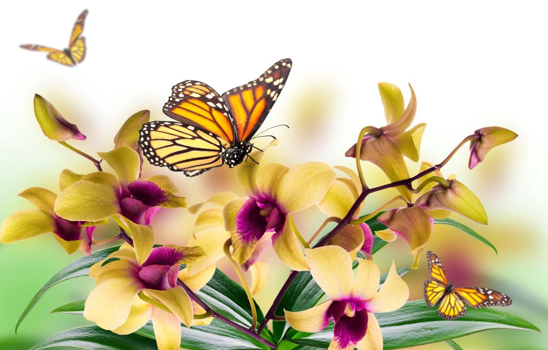 Обои мотылек, цветы, Коллаж. Разное foto 7