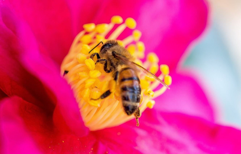пчела на цветке фотография опорой