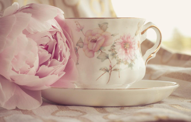 Фото обои цветы, лепестки, натюрморт