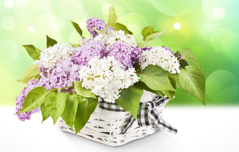 Фото обои цветы, корзина, лента, белая, фиолетовая, сирень