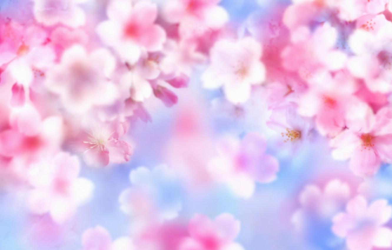 Обои лето, яркость, цветы. Цветы foto 6