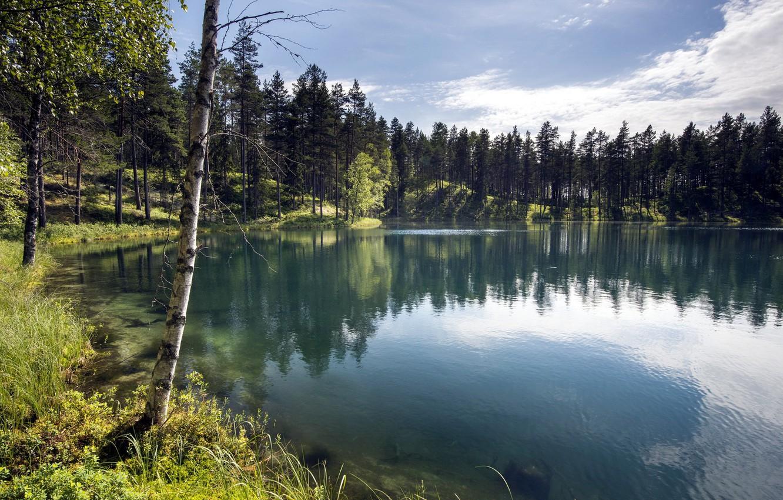 Лес у озера картинка