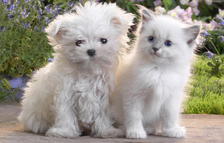 Фото обои кошка, котенок, собака, щенок, пушистые, Dog, Cat, Kitten, Cute, Puppy