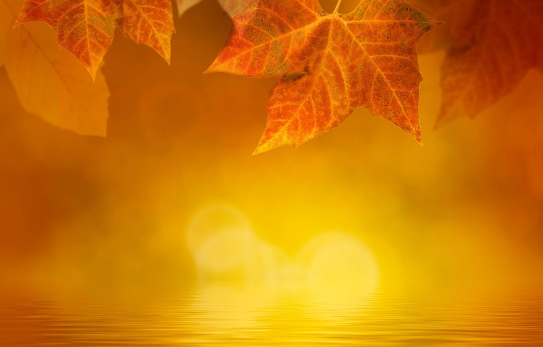 Фото обои осень, листья, вода, туман, блики, желтые, кленовые