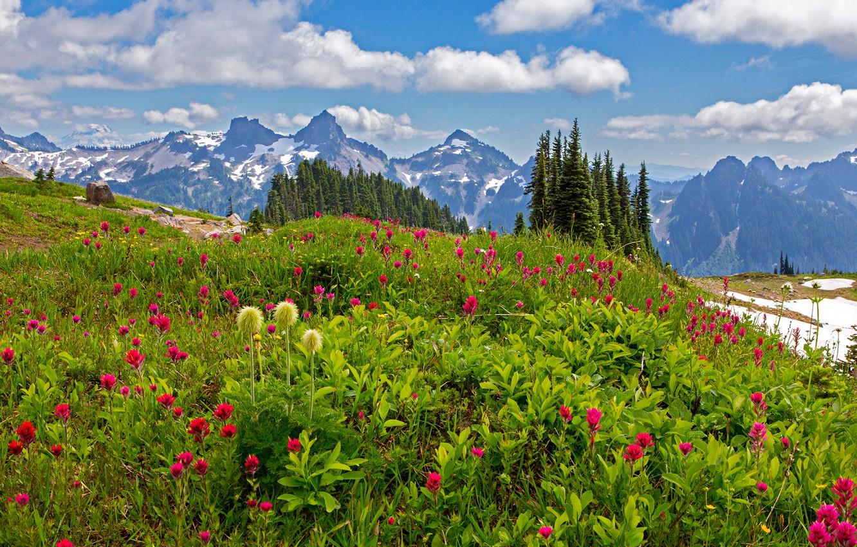 Фото обои трава, облака, деревья, цветы, горы, камни, Вашингтон, США, лужайка, Mount Rainier National Park