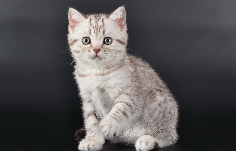 Фото обои котенок, малыш, милый