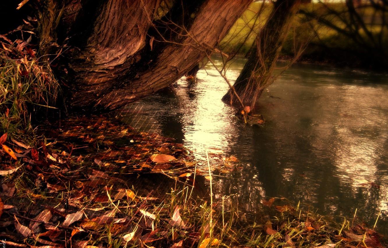 Фото обои осень, вода, полоски, природа, озеро, полосы, река, желтые опавшие листья